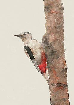 Great Spotted Woodpecker by Suesy Fulton