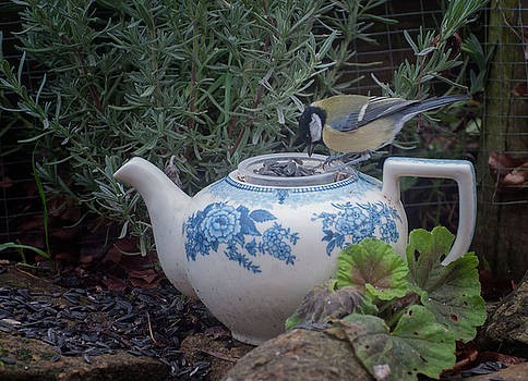 Great Tit and Vintage Tea Pot by Suesy Fulton