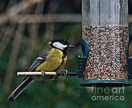 Great Tit on the feeder.  by Pete Moyes