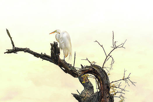 Great White Egret #2 by Donnie Smith