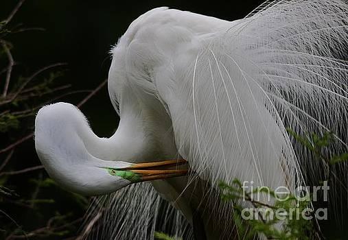 Paulette Thomas - Great White Egret Feathers