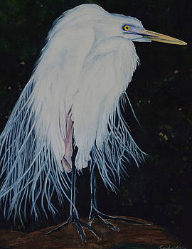 Great White Egret by Rasheeda Clawson