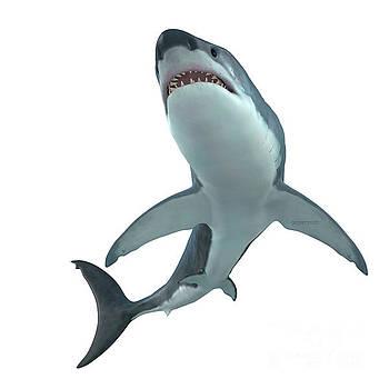 Corey Ford - Great White Shark Cruising
