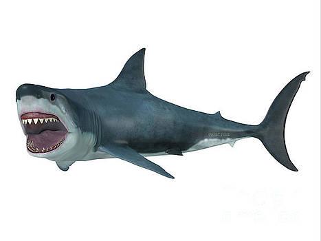 Corey Ford - Great White Shark Left Turn