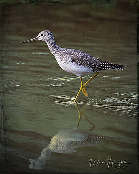 Greater Yellowlegs - 4410,ST by Wally Hampton