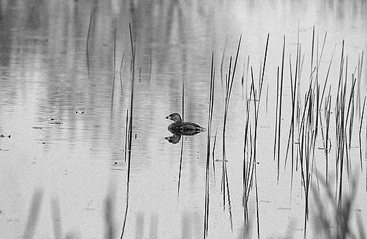 Debbie Oppermann - Grebe Black And White