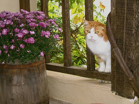 Yvonne Ayoub - Greece Cat in the Window