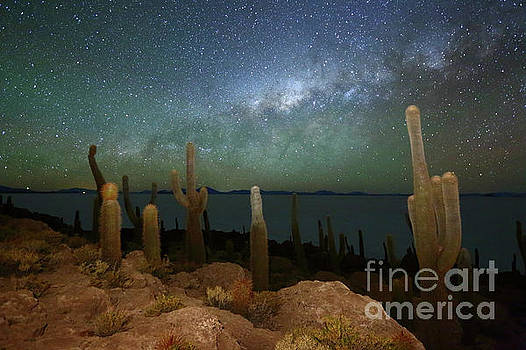 Green Airglow and Cacti on Incahuasi Island Bolivia by James Brunker