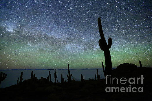 Green Airglow and Cactus Silhouette Incahuasi Island Bolivia by James Brunker
