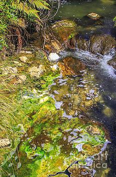 Patricia Hofmeester - Green algae in Rotorua