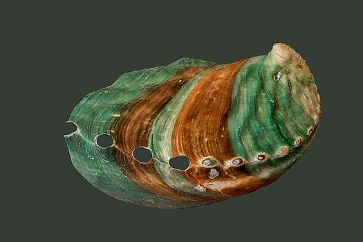 Green and Brown Shell Transparency by Richard Goldman