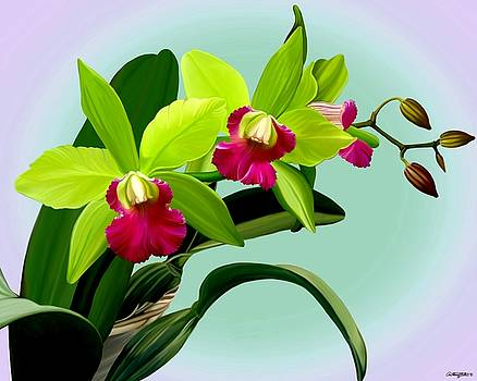 Green and Pink Cattleya Orchids by Anthony Seeker