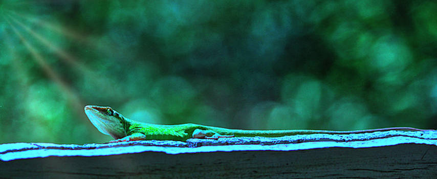 Green Anole Lizard by Randy Bayne