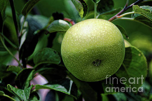Paul Mashburn - Green Apple