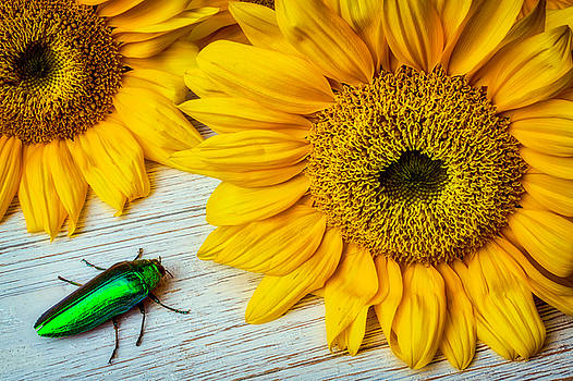 Green Beatle And Sunflower by Garry Gay
