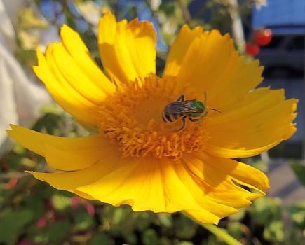 Green Bee-3 by Hatin Josee