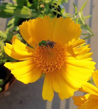 Green Bee by Hatin Josee