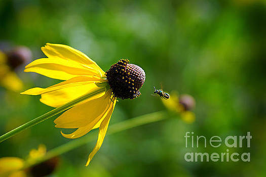 Green Bee in Flight by Robin Clifton