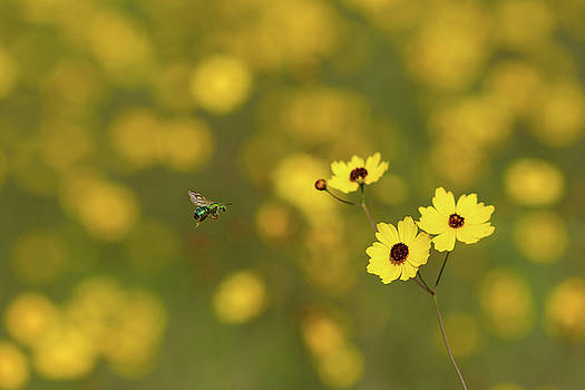 Paul Rebmann - Green Bee Yellow Flowers