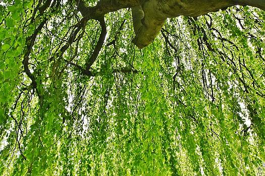 green Beech leave curtain by Werner Lehmann