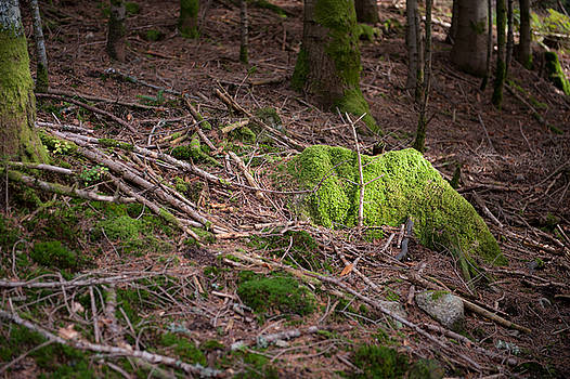 Green covered rock by Wim Slootweg