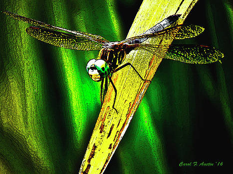 Green Darner Dragonfly Frontal Portrait by Carol F Austin
