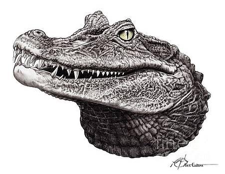 Green eyed Gator by Murphy Elliott