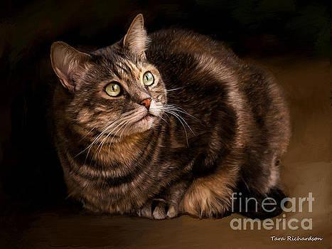 Green Eyed Kitty by Tara Richardson