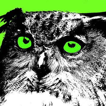 James Hill - Green Eyed Owl