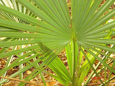 Green Fan by Martha Roehrick