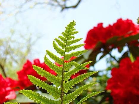 Baslee Troutman - Green Fern Branch art prints Red Rhododendrons