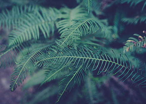 Green Ferns by Sarah Beth Smith