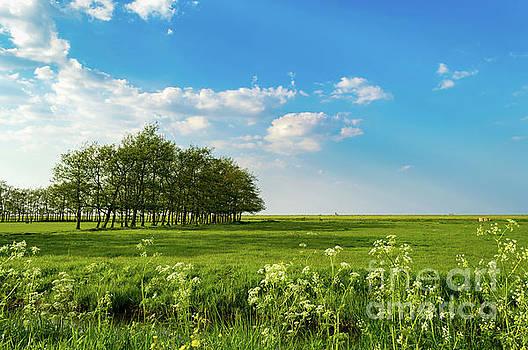 Green Field in Holland by Sinisa CIGLENECKI