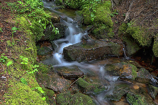 Green Flowing Stream by James BO Insogna