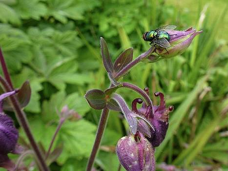 Green Fly by Renee Pettersson