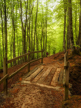 Green forest by ACAs Photography