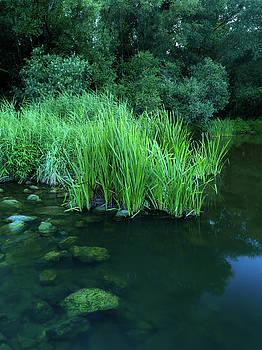 Green forest by Davor Zerjav