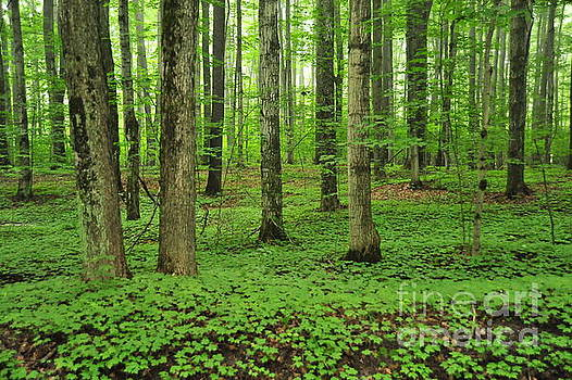 Green Forest by Terri Gostola