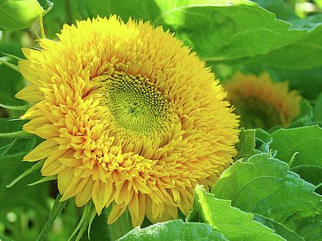 Baslee Troutman - Green Garden art Yellow Sunflower Floral Baslee Troutman