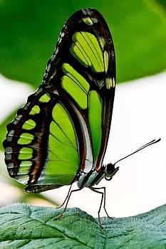 Green Goddess by E Mac MacKay