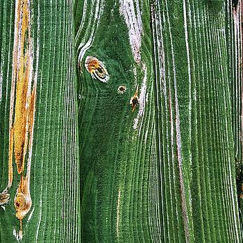 Green Grain by Anne Kotan