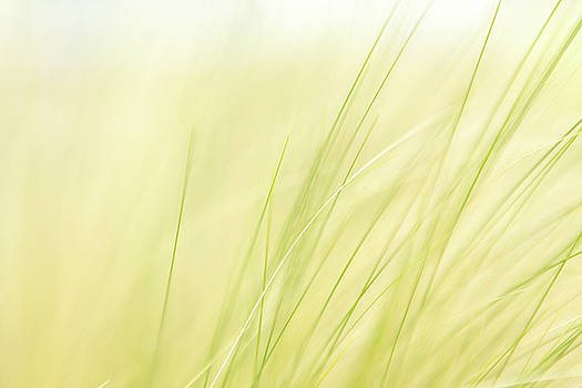 Green Grass In The Breeze by Debi Bishop