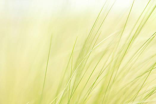 Green Grass In The Breeze by Debi Bishop