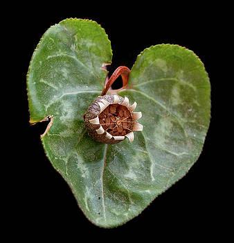 Michalakis Ppalis - Green Heart flower