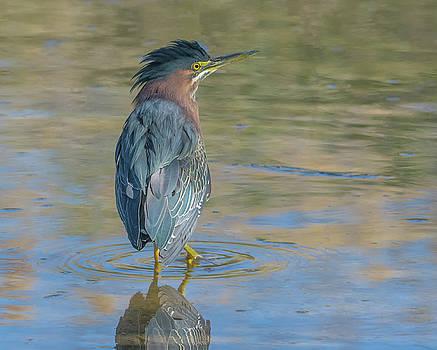 Green Heron 9278-022118-1 by Tam Ryan