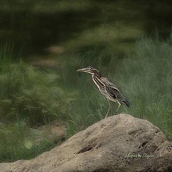 Karen Slagle - Green Heron