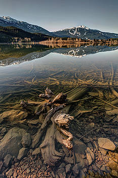 Green Lake Ironwood by Pierre Leclerc Photography
