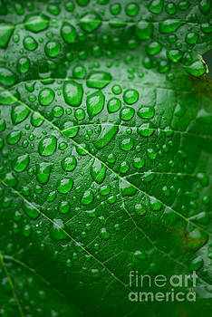 Green leaf and dew by Deyan Georgiev