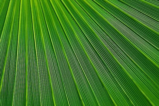 Green Leaf Background by Tilen Hrovatic