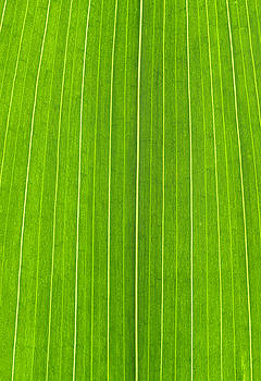 Green Leaf by Frank Tschakert